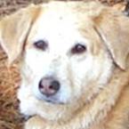 My Dog Annie